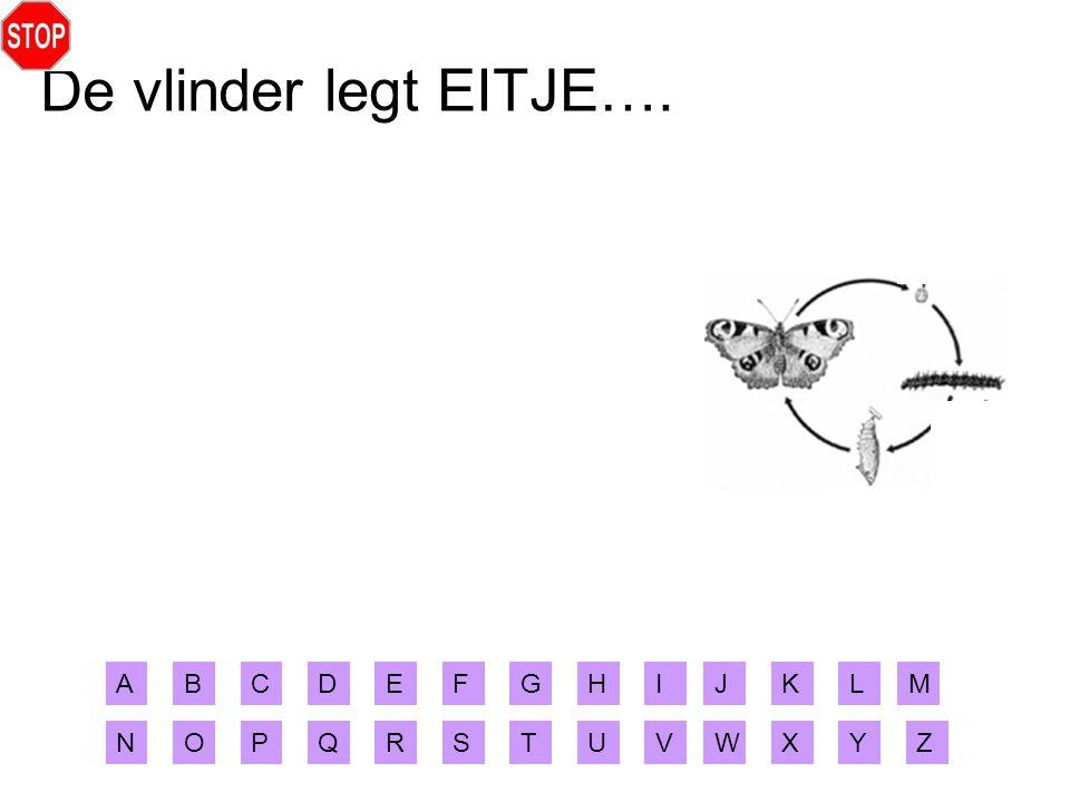 De vlinder legt EITJE…. ABCDEFGHIJ XYZ MLK RSTUVWNOPQ