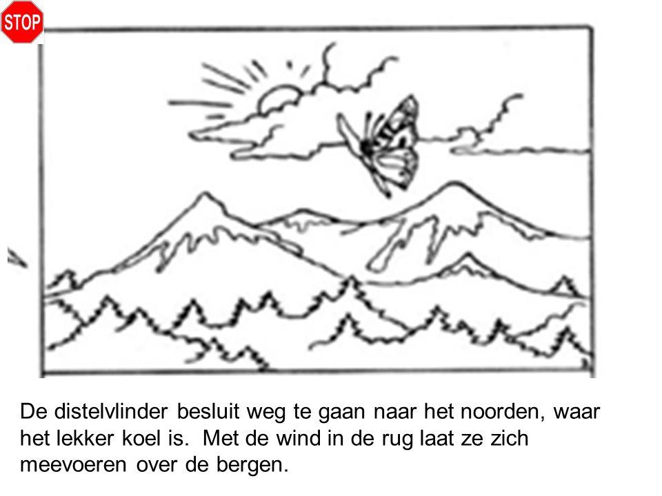 De distelvlinder besluit weg te gaan naar het noorden, waar het lekker koel is. Met de wind in de rug laat ze zich meevoeren over de bergen.