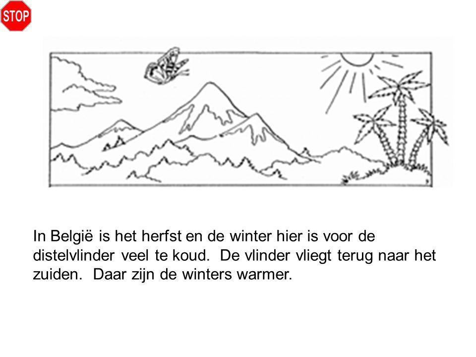 In België is het herfst en de winter hier is voor de distelvlinder veel te koud. De vlinder vliegt terug naar het zuiden. Daar zijn de winters warmer.