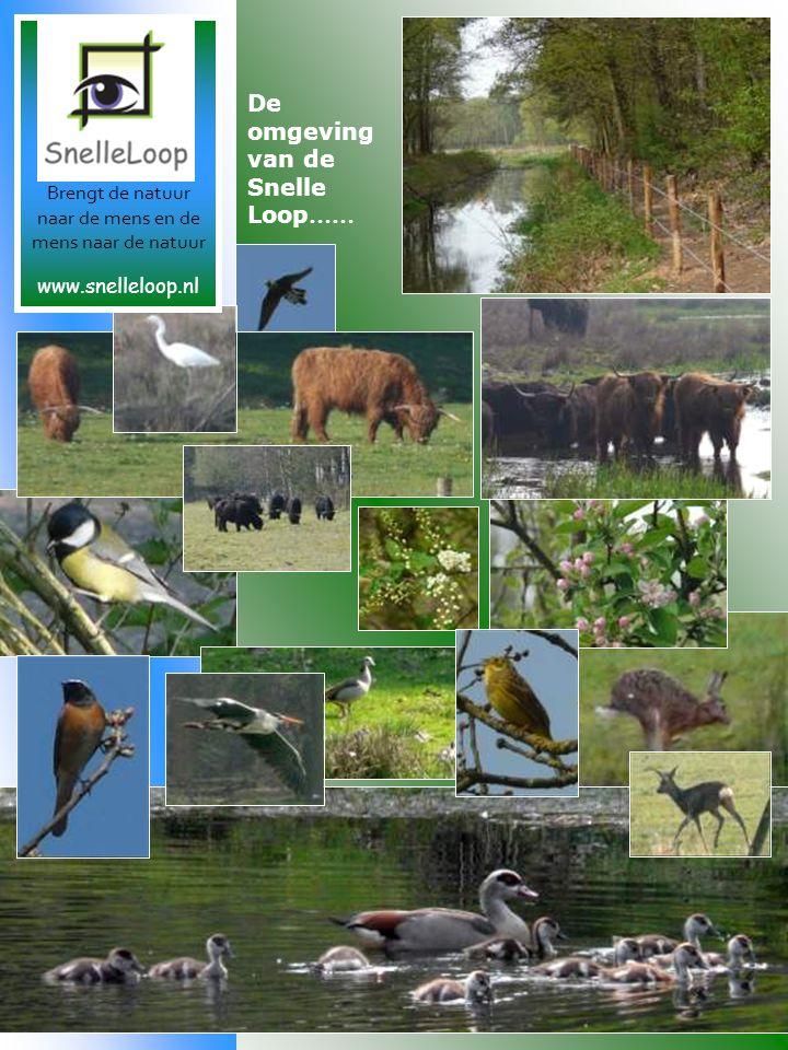 De omgeving van de Snelle Loop …… Brengt de natuur naar de mens en de mens naar de natuur www.snelleloop.nl