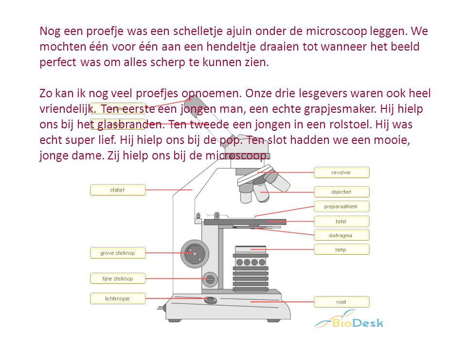 Nog een proefje was een schelletje ajuin onder de microscoop leggen.