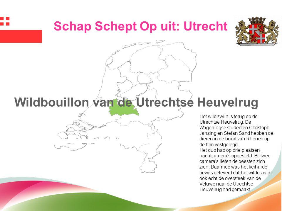 Wildbouillon van de Utrechtse Heuvelrug Schap Schept Op uit: Utrecht Het wild zwijn is terug op de Utrechtse Heuvelrug. De Wageningse studenten Christ