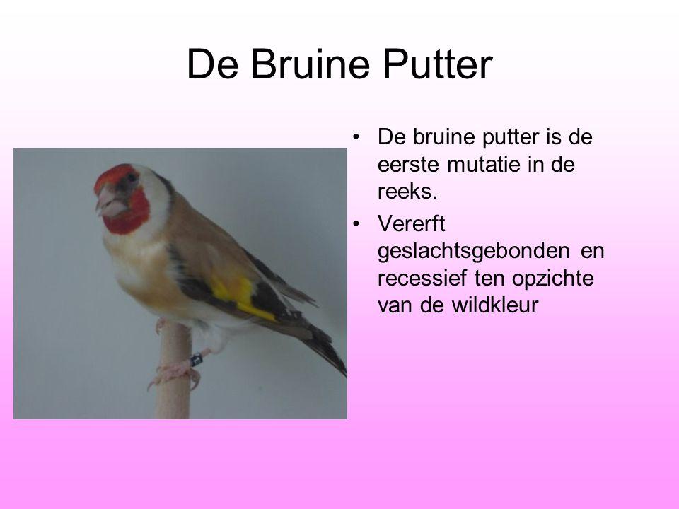 De Bruine Putter •De bruine putter is de eerste mutatie in de reeks. •Vererft geslachtsgebonden en recessief ten opzichte van de wildkleur