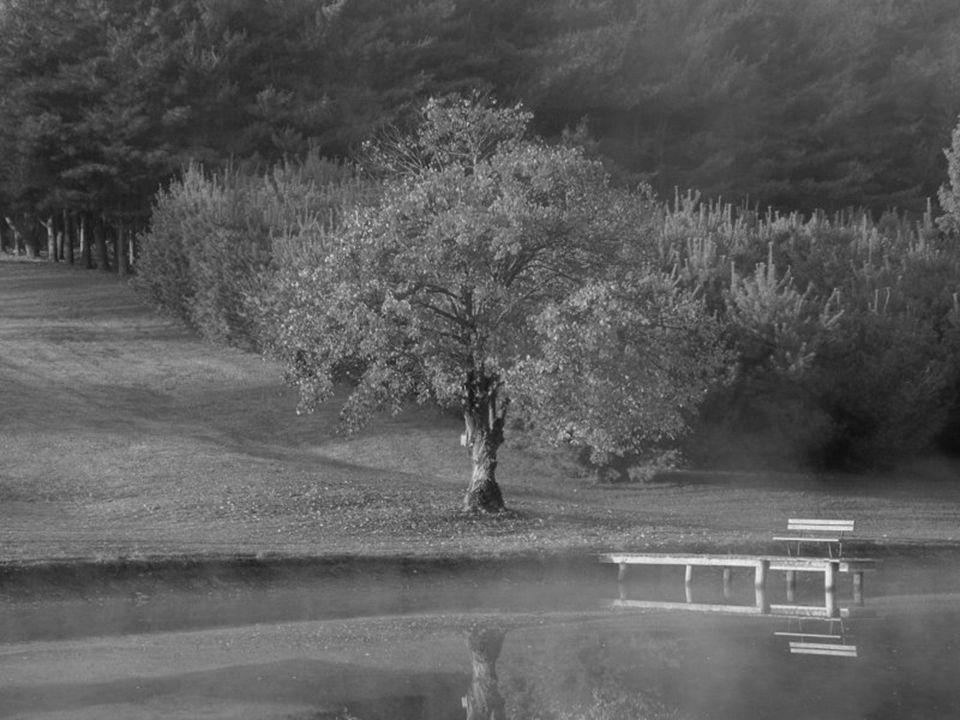 Voor de hele ontwikkeling van het menselijk wezen, wordt eenzaamheid noodzakelijk, als een manier om gevoeligheid te kweken.