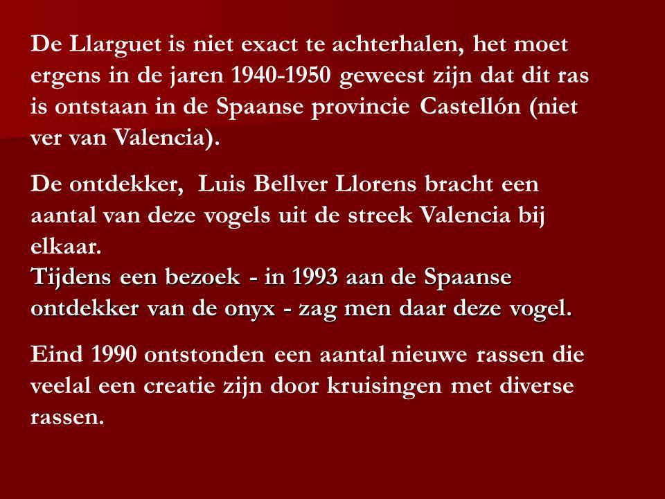 De Llarguet is niet exact te achterhalen, het moet ergens in de jaren 1940-1950 geweest zijn dat dit ras is ontstaan in de Spaanse provincie Castellón