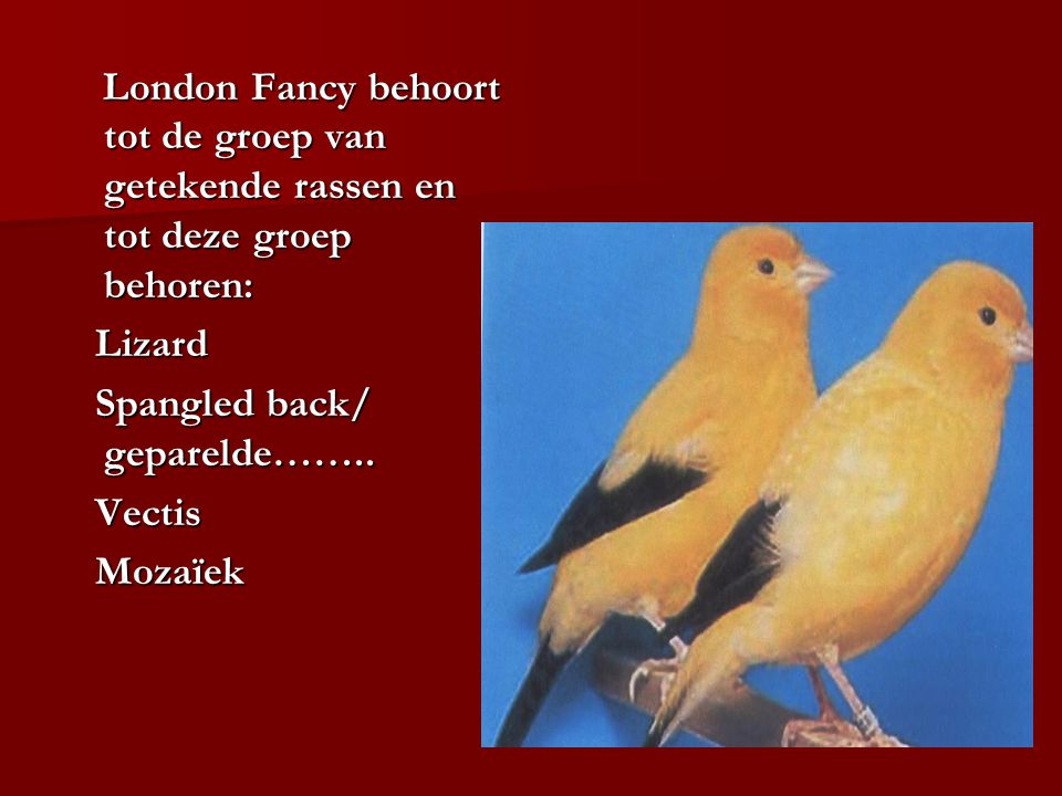 London Fancy behoort tot de groep van getekende rassen en tot deze groep behoren: London Fancy behoort tot de groep van getekende rassen en tot deze g