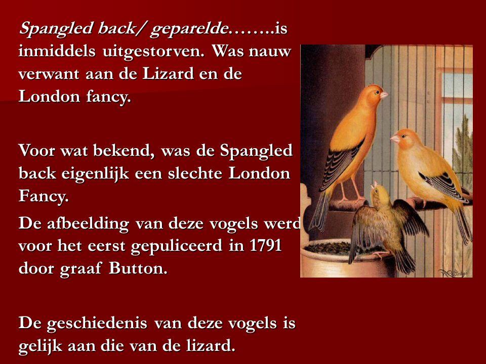 Spangled back/ geparelde……..is inmiddels uitgestorven. Was nauw verwant aan de Lizard en de London fancy. Voor wat bekend, was de Spangled back eigenl