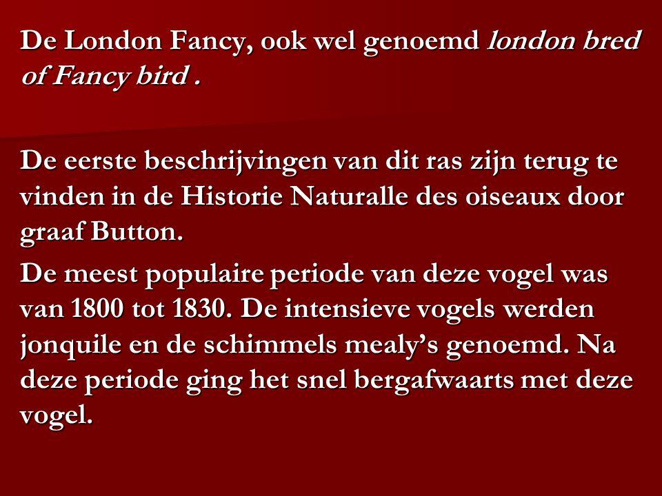 De London Fancy, ook wel genoemd london bred of Fancy bird. De eerste beschrijvingen van dit ras zijn terug te vinden in de Historie Naturalle des ois