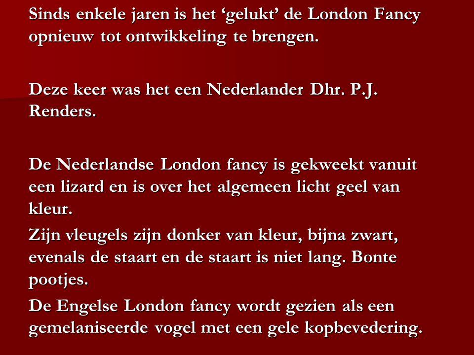 Sinds enkele jaren is het 'gelukt' de London Fancy opnieuw tot ontwikkeling te brengen. Deze keer was het een Nederlander Dhr. P.J. Renders. De Nederl