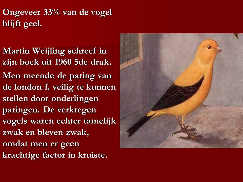 Ongeveer 33% van de vogel blijft geel. Martin Weijling schreef in zijn boek uit 1960 5de druk. Men meende de paring van de london f. veilig te kunnen