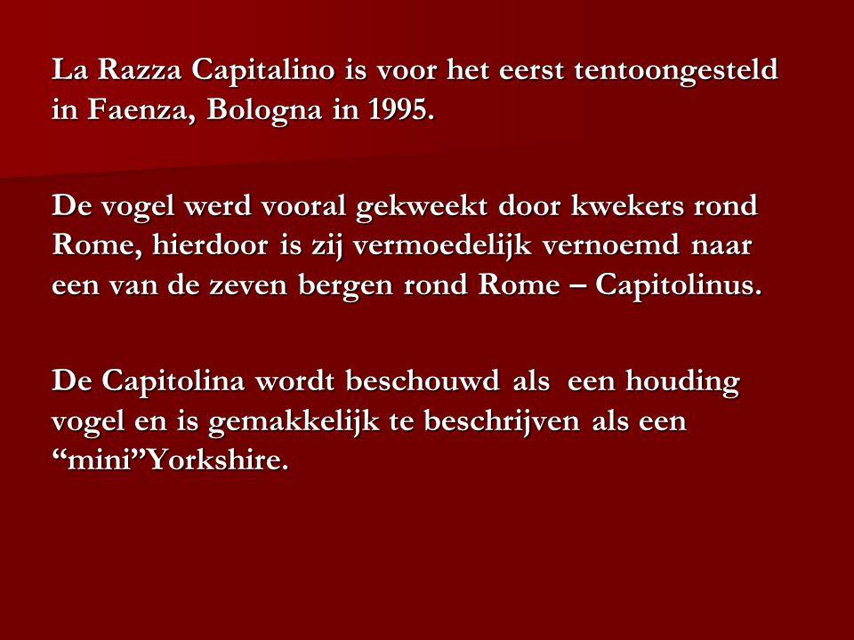 La Razza Capitalino is voor het eerst tentoongesteld in Faenza, Bologna in 1995. De vogel werd vooral gekweekt door kwekers rond Rome, hierdoor is zij