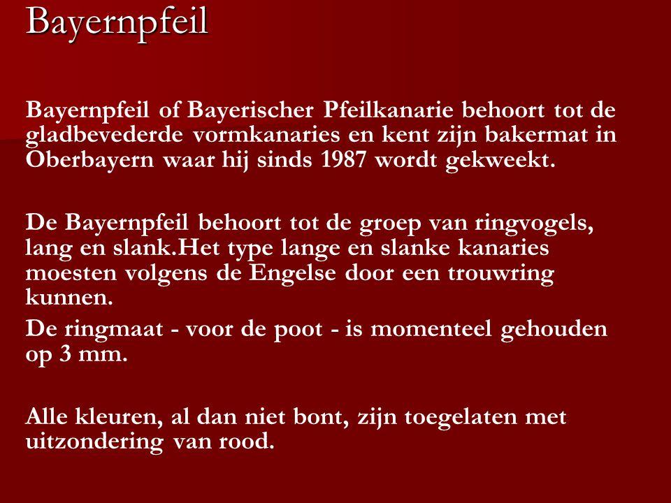 Bayernpfeil Bayernpfeil of Bayerischer Pfeilkanarie behoort tot de gladbevederde vormkanaries en kent zijn bakermat in Oberbayern waar hij sinds 1987