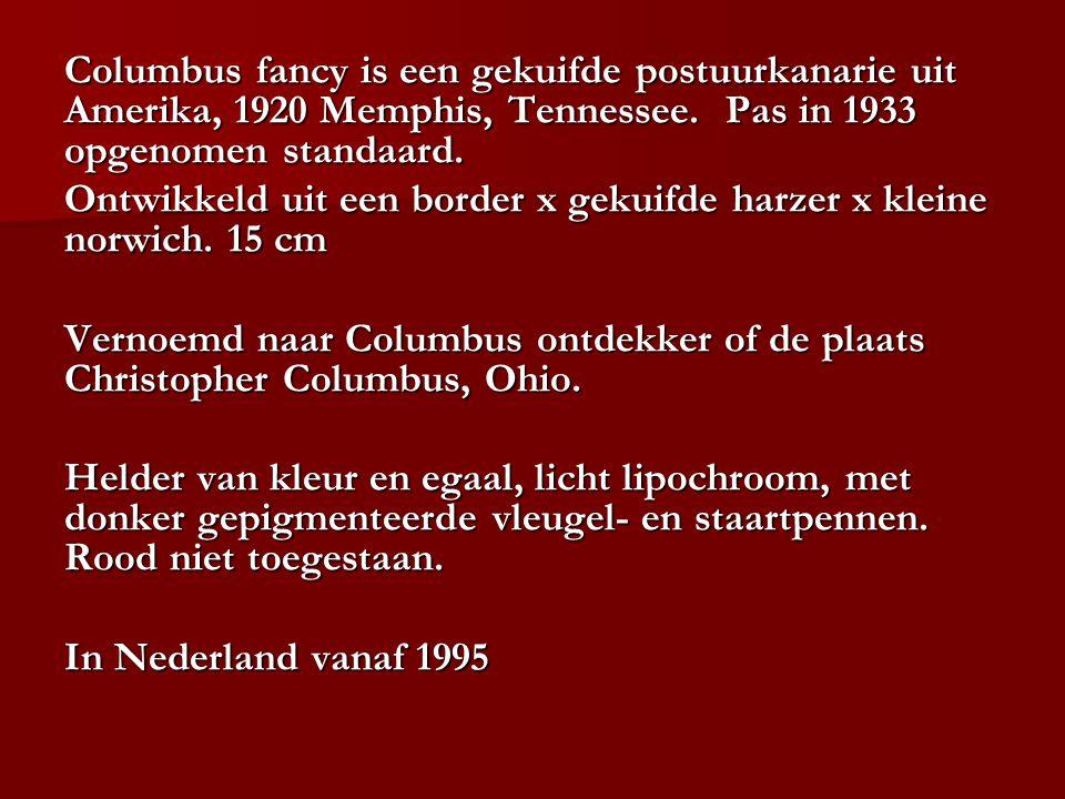 Columbus fancy is een gekuifde postuurkanarie uit Amerika, 1920 Memphis, Tennessee. Pas in 1933 opgenomen standaard. Ontwikkeld uit een border x gekui