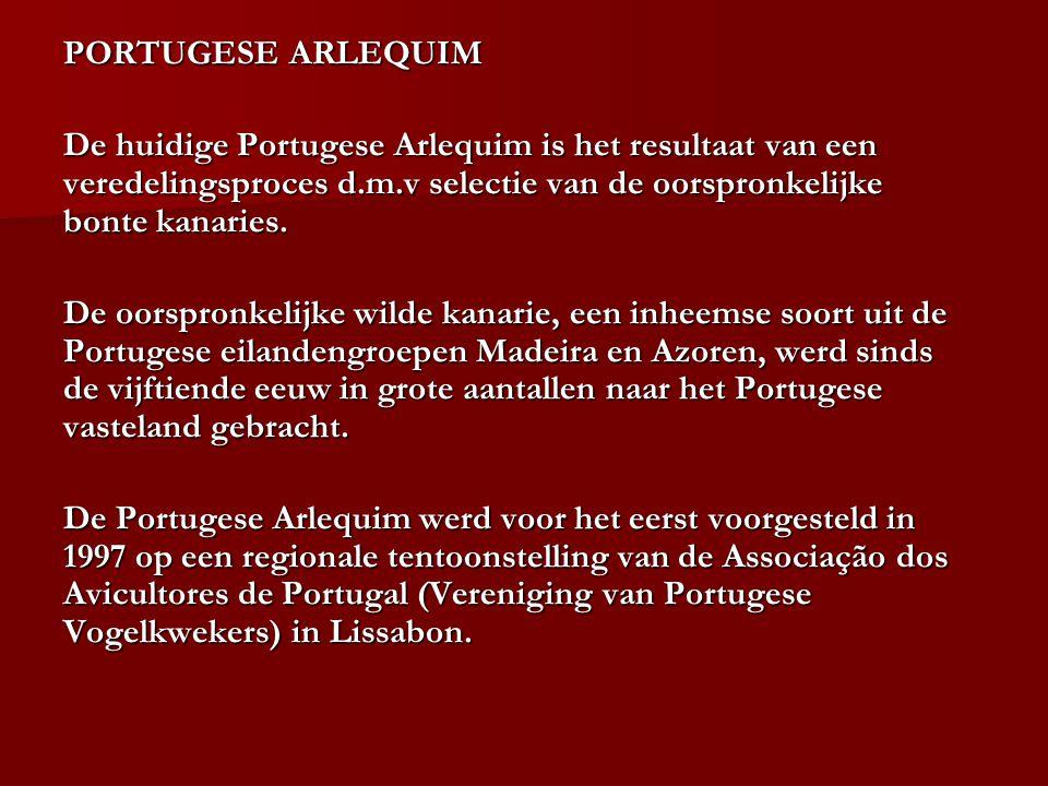 De huidige Portugese Arlequim is het resultaat van een veredelingsproces d.m.v selectie van de oorspronkelijke bonte kanaries. De oorspronkelijke wild