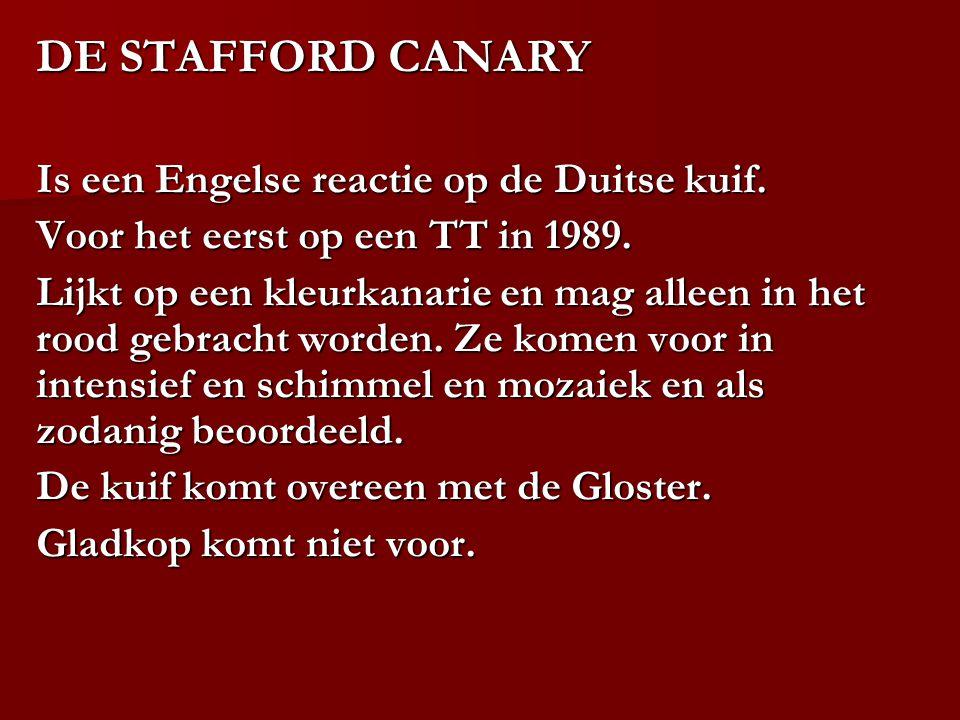 DE STAFFORD CANARY Is een Engelse reactie op de Duitse kuif. Voor het eerst op een TT in 1989. Lijkt op een kleurkanarie en mag alleen in het rood geb