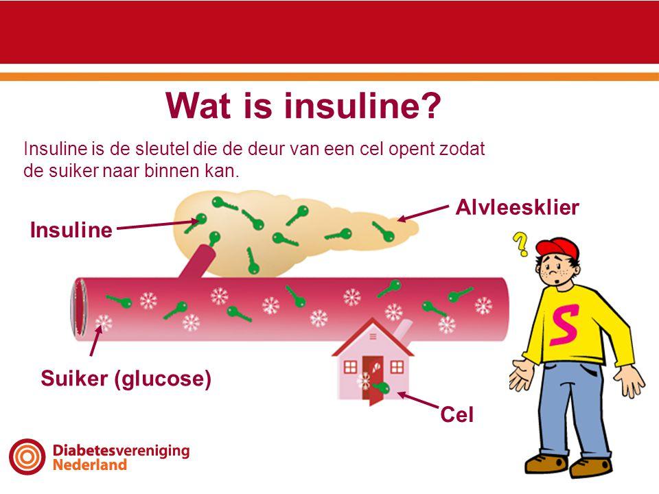 Wat is insuline? Alvleesklier Suiker (glucose) Insuline Cel Insuline is de sleutel die de deur van een cel opent zodat de suiker naar binnen kan.