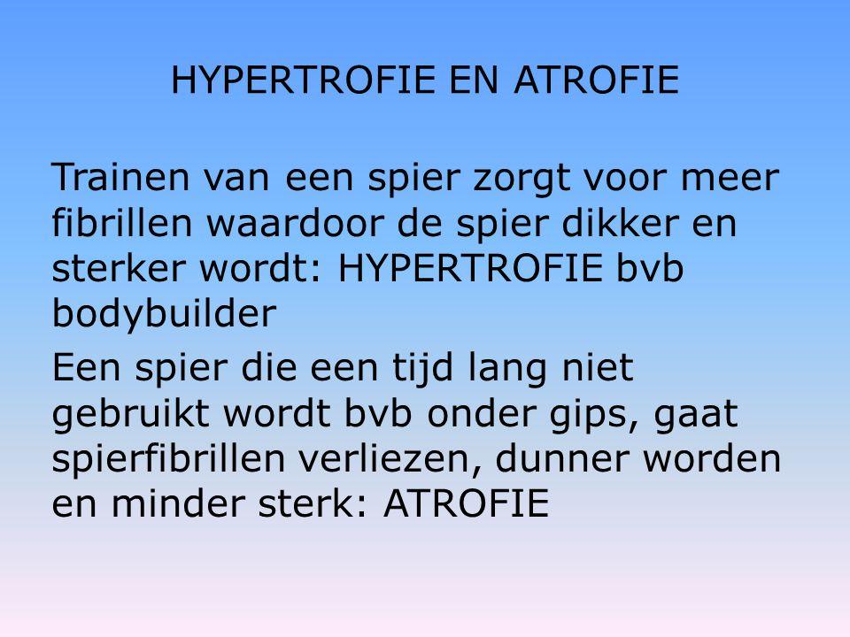 HYPERTROFIE EN ATROFIE Trainen van een spier zorgt voor meer fibrillen waardoor de spier dikker en sterker wordt: HYPERTROFIE bvb bodybuilder Een spie