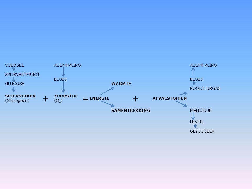 VOEDSELADEMHALING SPIJSVERTERING BLOED GLUCOSE WARMTE KOOLZUURGAS SPIERSUIKER (Glycogeen) + ZUURSTOF (O 2 ) = ENERGIE + AFVALSTOFFEN SAMENTREKKINGMELK
