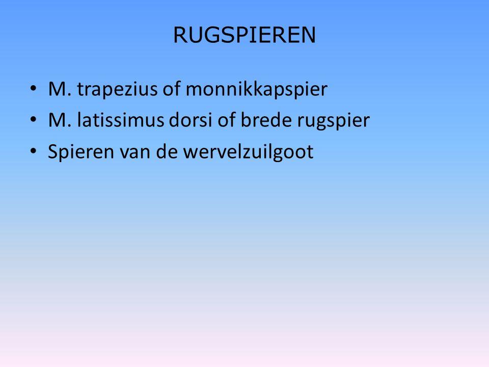 RUGSPIEREN • M. trapezius of monnikkapspier • M. latissimus dorsi of brede rugspier • Spieren van de wervelzuilgoot