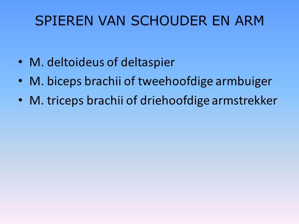 • M. deltoideus of deltaspier • M. biceps brachii of tweehoofdige armbuiger • M. triceps brachii of driehoofdige armstrekker