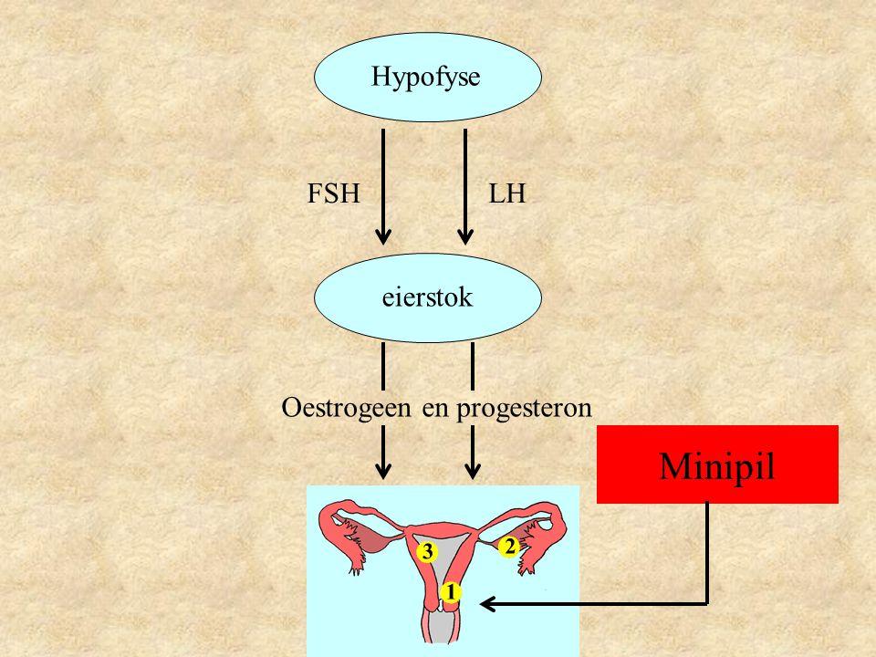 Hypofyse eierstok LHFSH Oestrogeen en progesteron Minipil