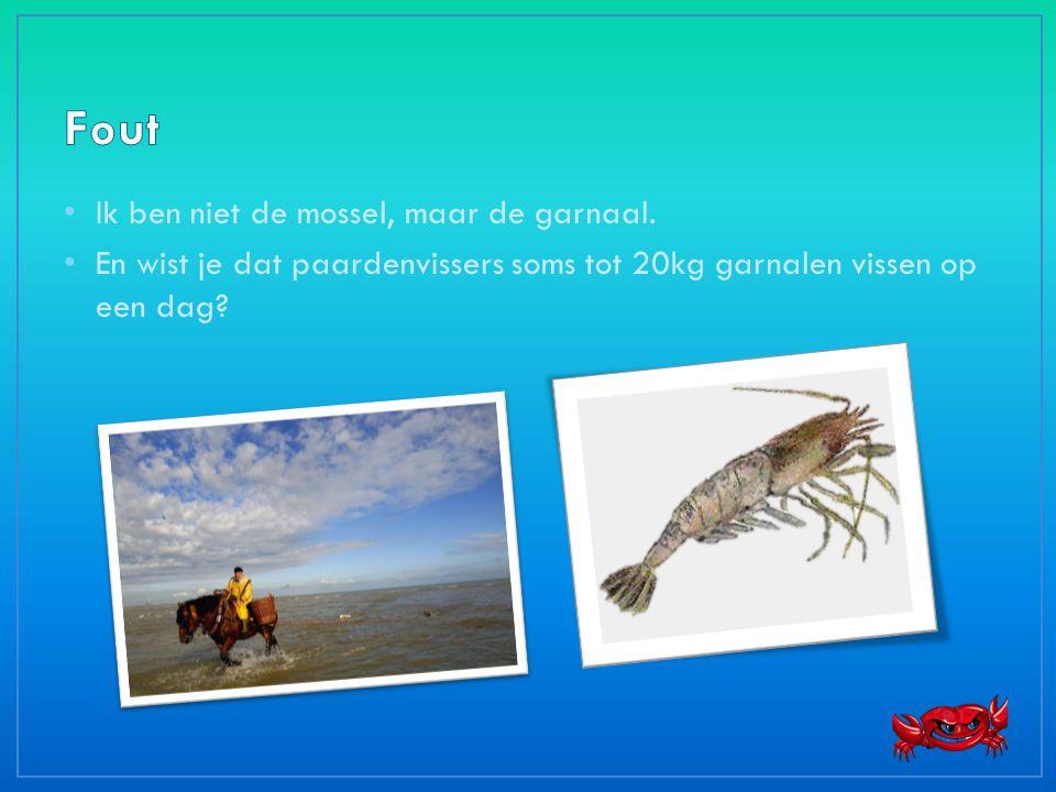 • Ik ben niet de mossel, maar de garnaal. • En wist je dat paardenvissers soms tot 20kg garnalen vissen op een dag?