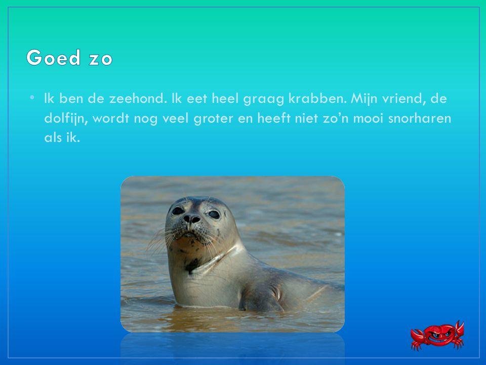 • Ik ben de zeehond. Ik eet heel graag krabben. Mijn vriend, de dolfijn, wordt nog veel groter en heeft niet zo'n mooi snorharen als ik.