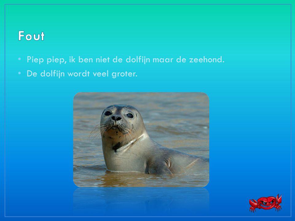 • Piep piep, ik ben niet de dolfijn maar de zeehond. • De dolfijn wordt veel groter.