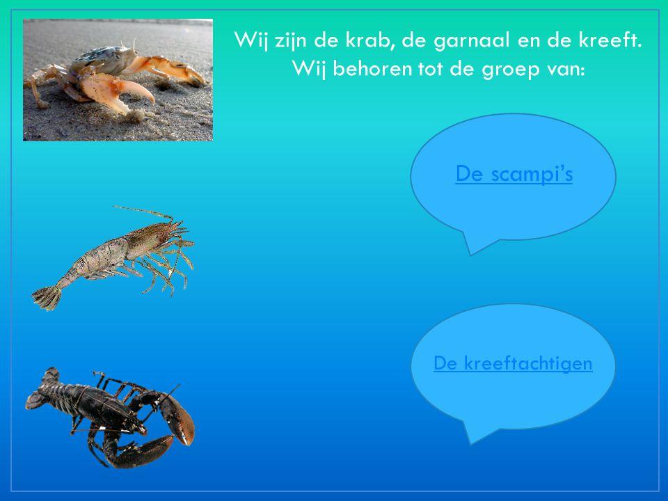 Wij zijn de krab, de garnaal en de kreeft. Wij behoren tot de groep van: De scampi's De kreeftachtigen