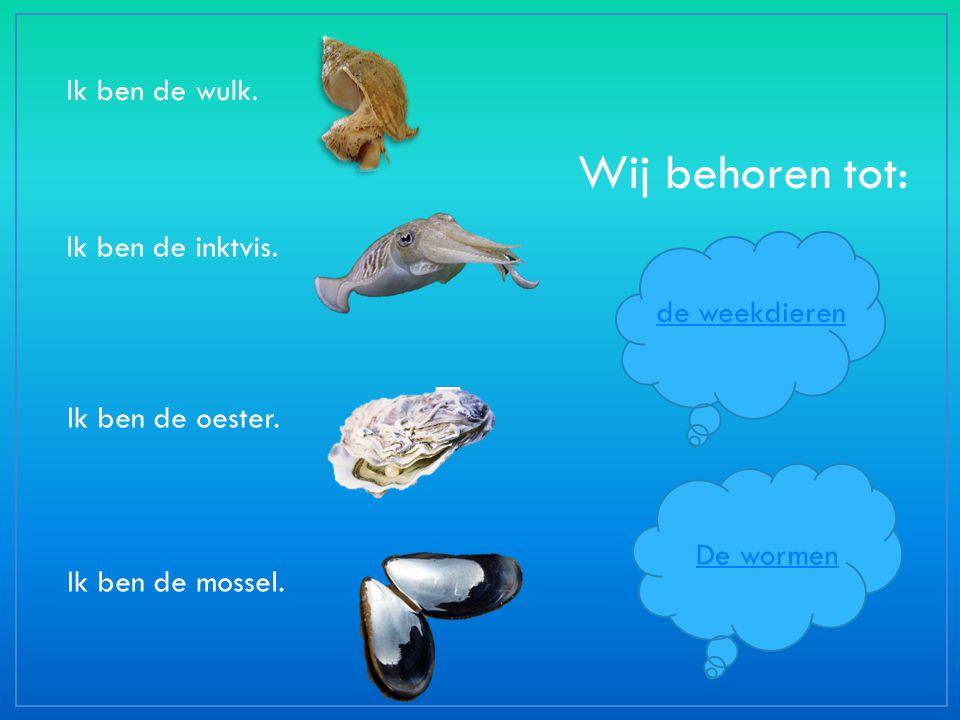 Ik ben de wulk. Ik ben de inktvis. Ik ben de oester. Ik ben de mossel. Wij behoren tot: de weekdieren De wormen