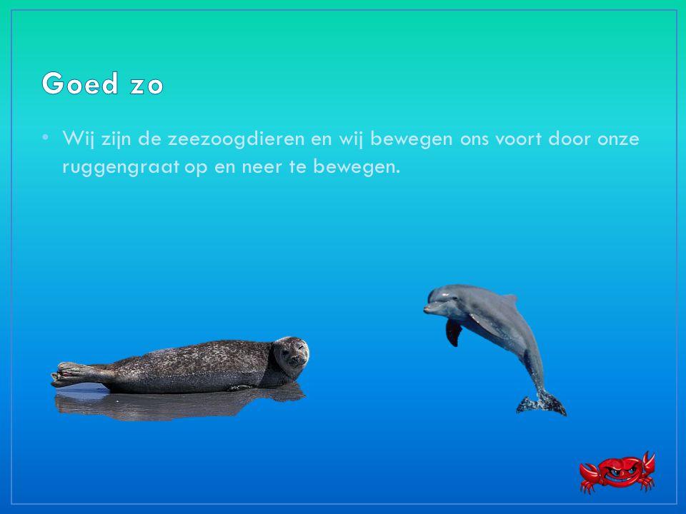 • Wij zijn de zeezoogdieren en wij bewegen ons voort door onze ruggengraat op en neer te bewegen.