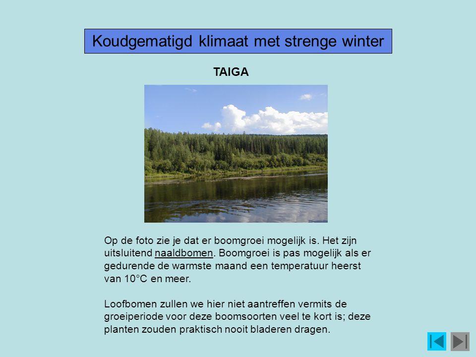 Koudgematigd klimaat met strenge winter Op de foto zie je dat er boomgroei mogelijk is.