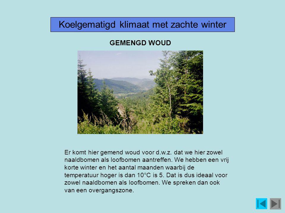 Koelgematigd klimaat met zachte winter Er komt hier gemend woud voor d.w.z.