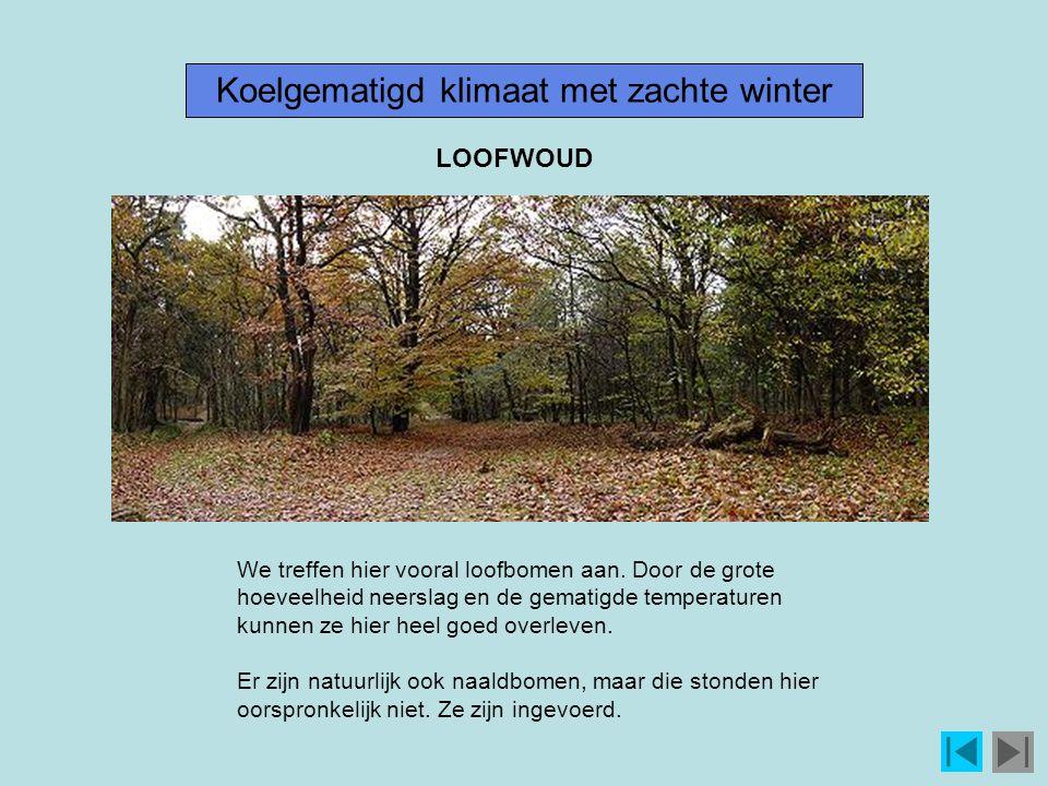 Koelgematigd klimaat met zachte winter We treffen hier vooral loofbomen aan.