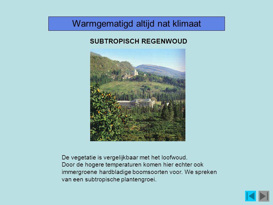 Warmgematigd altijd nat klimaat De vegetatie is vergelijkbaar met het loofwoud.