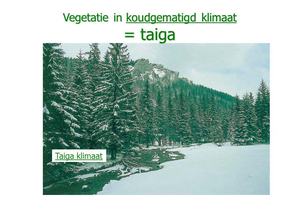 Vegetatie in koudgematigd klimaat = taiga Taiga klimaat