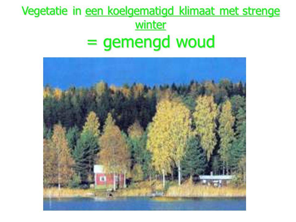 Vegetatie in een koelgematigd klimaat met strenge winter = gemengd woud