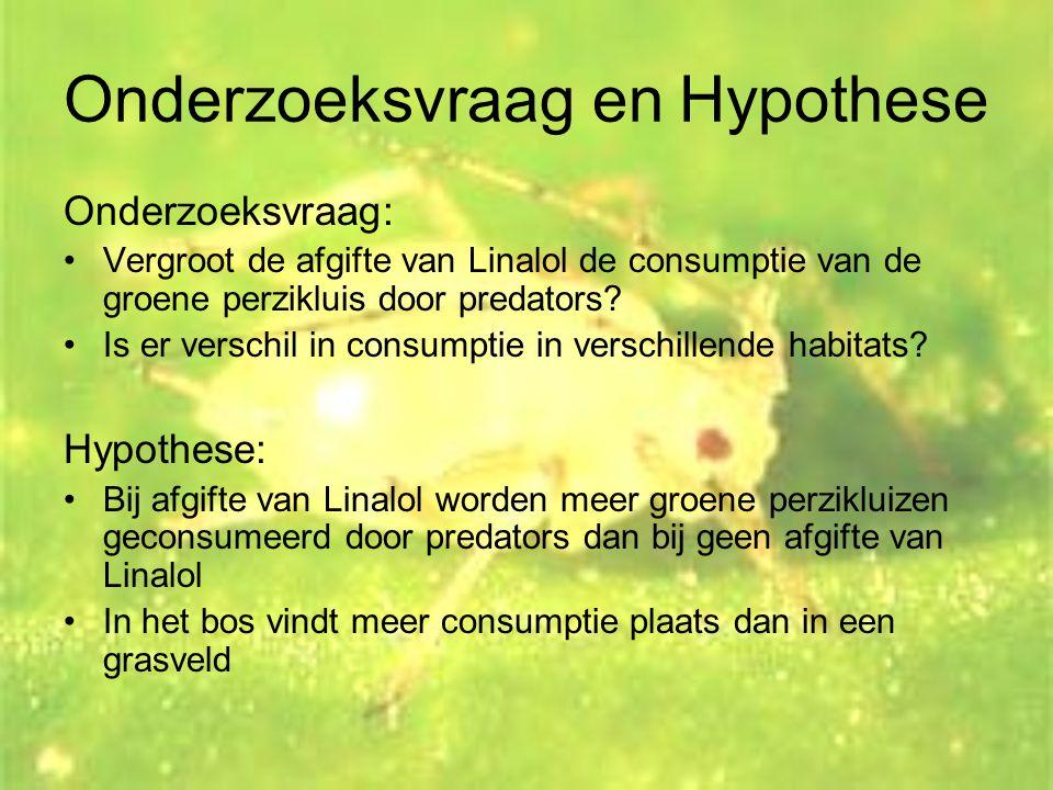 Onderzoeksvraag en Hypothese Onderzoeksvraag: •Vergroot de afgifte van Linalol de consumptie van de groene perzikluis door predators? •Is er verschil