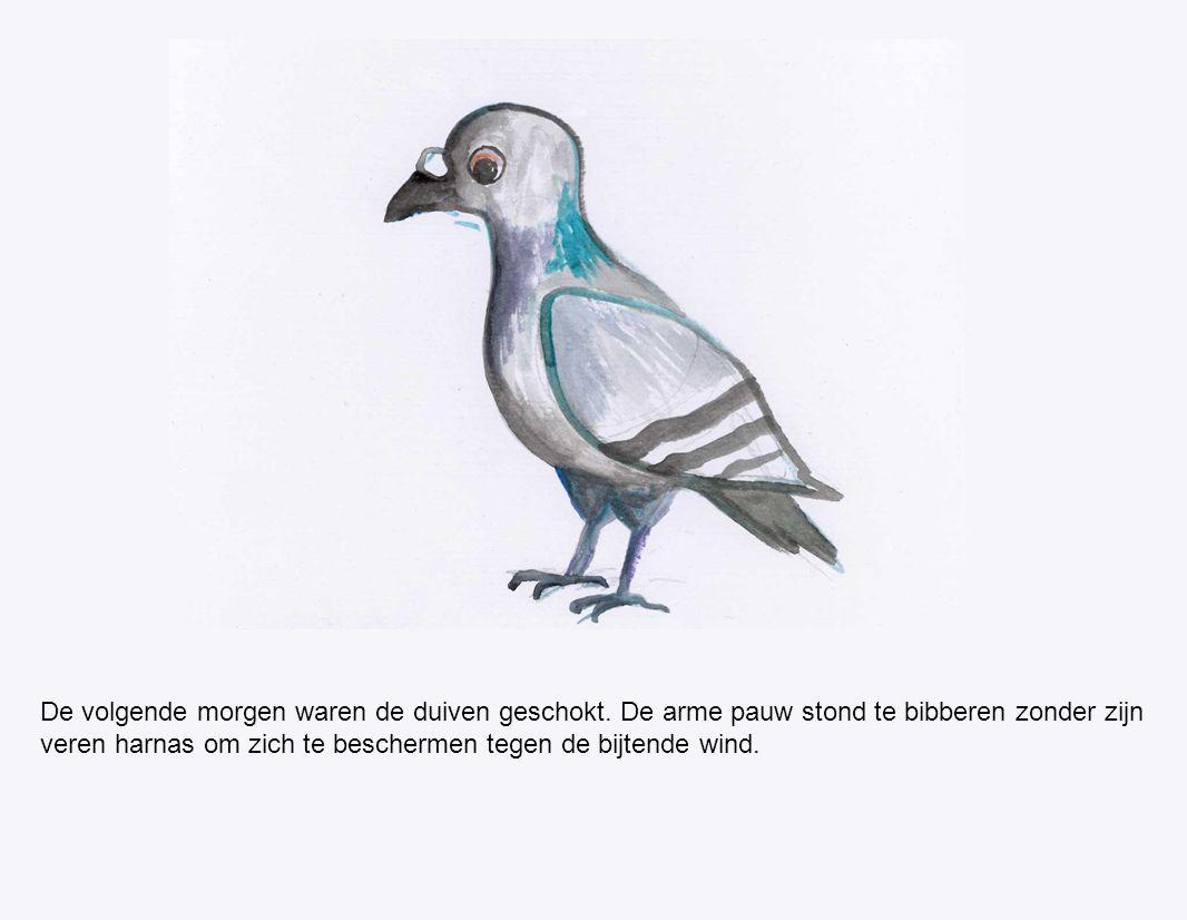 De volgende morgen waren de duiven geschokt. De arme pauw stond te bibberen zonder zijn veren harnas om zich te beschermen tegen de bijtende wind.