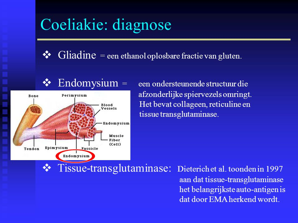 Coeliakie: diagnose  Gliadine = een ethanol oplosbare fractie van gluten.  Endomysium = een ondersteunende structuur die afzonderlijke spiervezels o