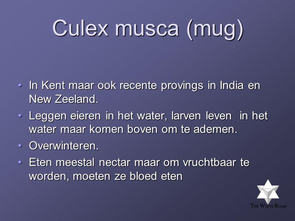 Culex musca (mug) •In Kent maar ook recente provings in India en New Zeeland.