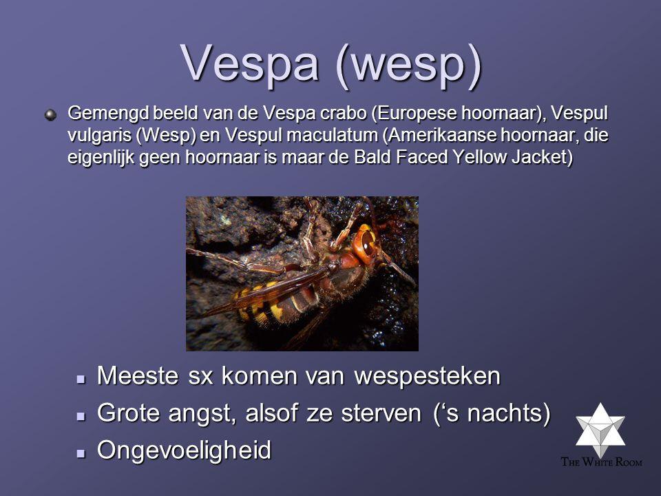 Vespa (wesp) Gemengd beeld van de Vespa crabo (Europese hoornaar), Vespul vulgaris (Wesp) en Vespul maculatum (Amerikaanse hoornaar, die eigenlijk geen hoornaar is maar de Bald Faced Yellow Jacket)  Meeste sx komen van wespesteken  Grote angst, alsof ze sterven ('s nachts)  Ongevoeligheid