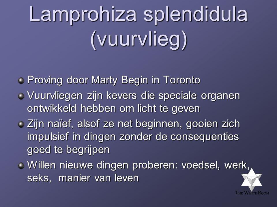 Lamprohiza splendidula (vuurvlieg) Proving door Marty Begin in Toronto Vuurvliegen zijn kevers die speciale organen ontwikkeld hebben om licht te geven Zijn naïef, alsof ze net beginnen, gooien zich impulsief in dingen zonder de consequenties goed te begrijpen Willen nieuwe dingen proberen: voedsel, werk, seks, manier van leven