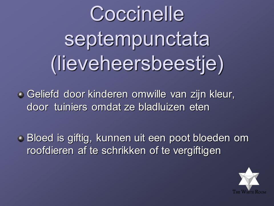 Coccinelle septempunctata (lieveheersbeestje) Geliefd door kinderen omwille van zijn kleur, door tuiniers omdat ze bladluizen eten Bloed is giftig, kunnen uit een poot bloeden om roofdieren af te schrikken of te vergiftigen
