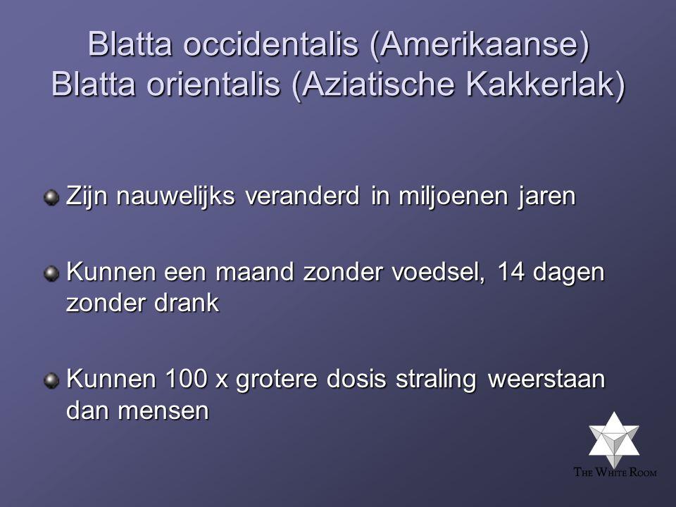 Blatta occidentalis (Amerikaanse) Blatta orientalis (Aziatische Kakkerlak) Zijn nauwelijks veranderd in miljoenen jaren Kunnen een maand zonder voedsel, 14 dagen zonder drank Kunnen 100 x grotere dosis straling weerstaan dan mensen