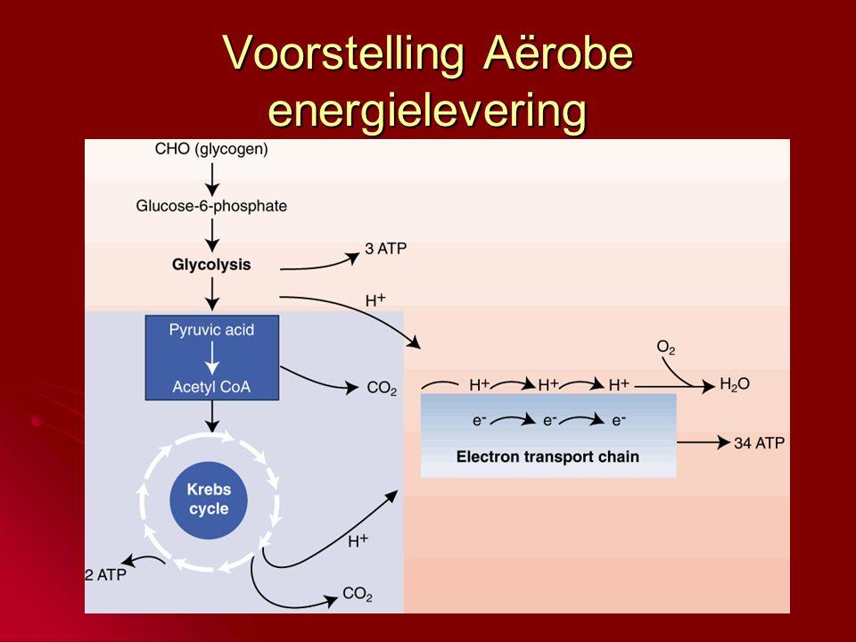 Voorstelling Aërobe energielevering