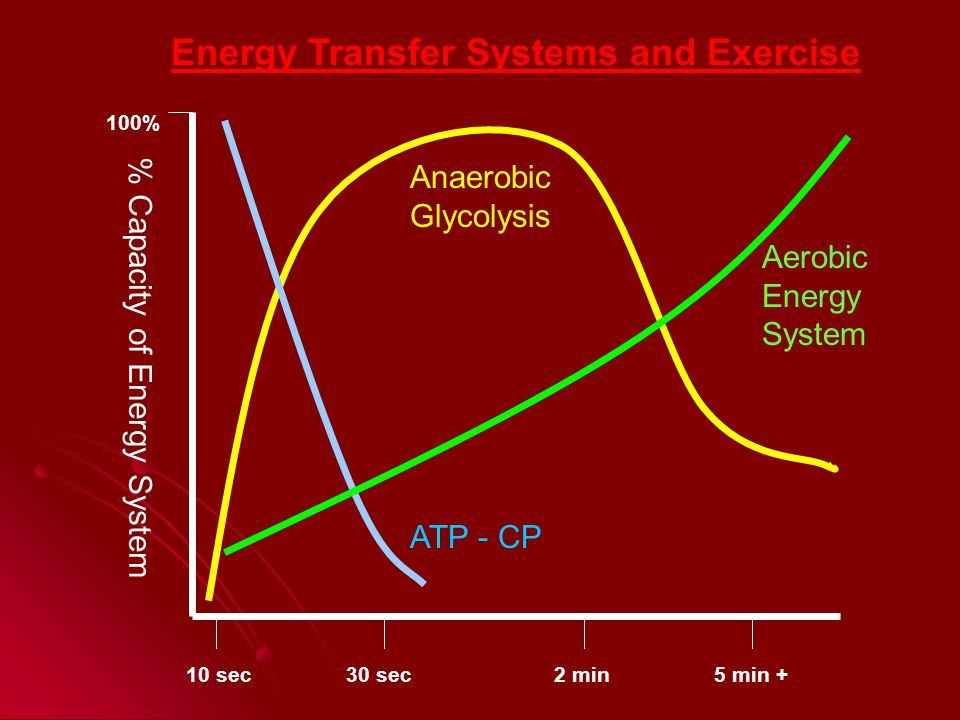 100% % Capacity of Energy System 10 sec30 sec2 min5 min + Energy Transfer Systems and Exercise Aerobic Energy System Anaerobic Glycolysis ATP - CP