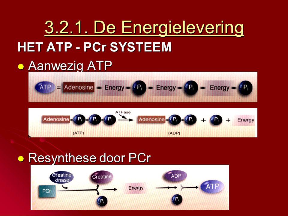 HET ATP - PCr SYSTEEM  Voorkomt uitputting van energiesysteem door aanmaak ATP.