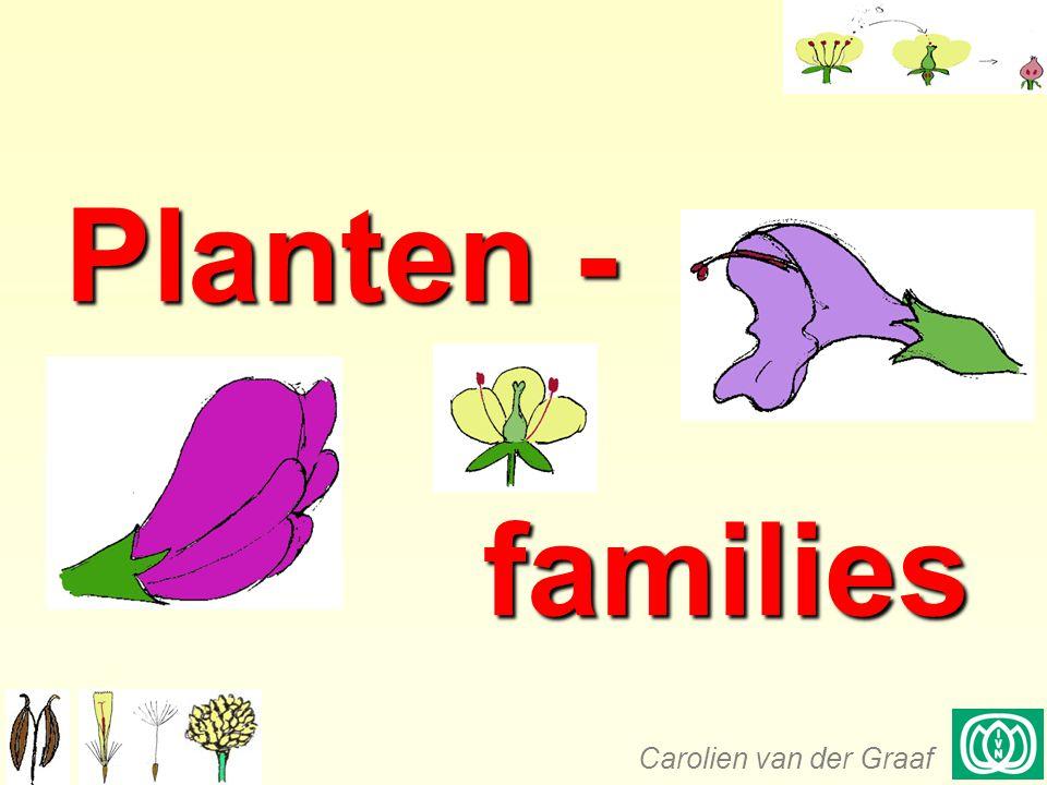 Programma Luisteren (20 min) •Korte herhaling vorige les •Kenmerken plantenfamilies Doen (10 min): •Quiz test je kennis (15 min) Luisteren (1 min) •Korte toelichting op handige flora's, cursussen