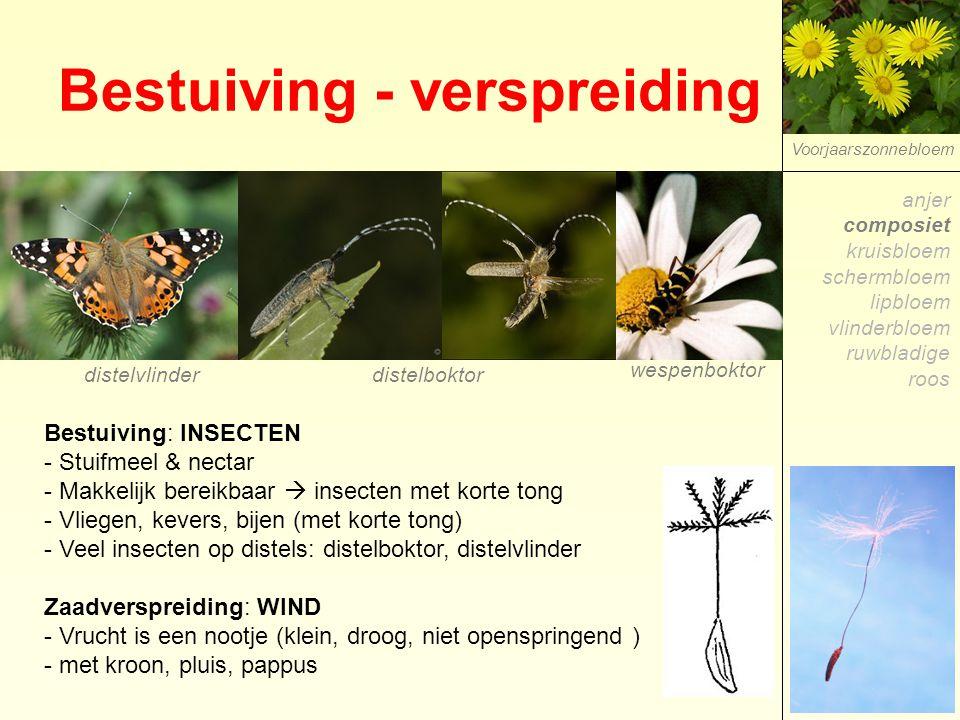 Bestuiving - verspreiding Voorjaarszonnebloem Bestuiving: INSECTEN - Stuifmeel & nectar - Makkelijk bereikbaar  insecten met korte tong - Vliegen, ke